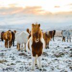Iceland-winter-(10)-Holiday