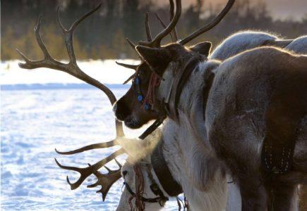 Finnish-Lapland
