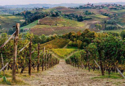 Truffle-Hunting-(7)-Italy-Holiday